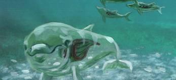 Läpinäkyvä delfiini ui vedessä. Teosluonnos Leena Pukin ja Karoliina Paapan teoksesta Toisen nahoissa - Syväluotaus.