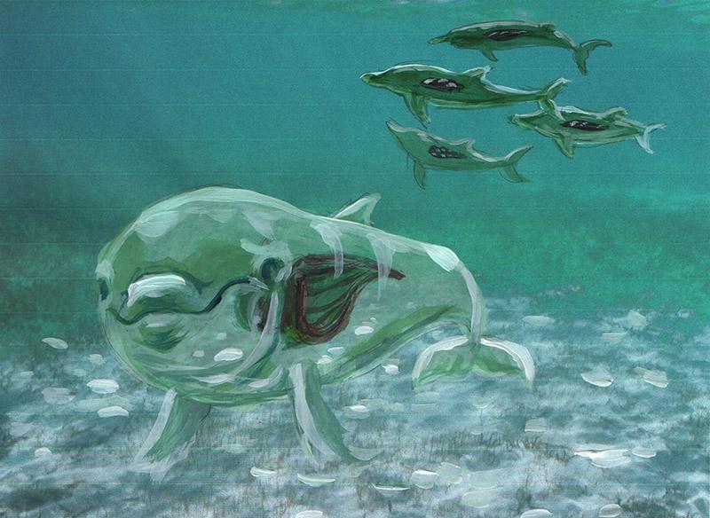 Piirros, jossa läpinäkyvä delfiini ui vedessä. Teosluonnos Leena Pukin ja Karoliina Paapan teoksesta Toisen nahoissa - Syväluotaus.